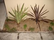 これはなんて言う植物?