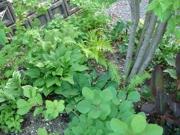 現在のお庭