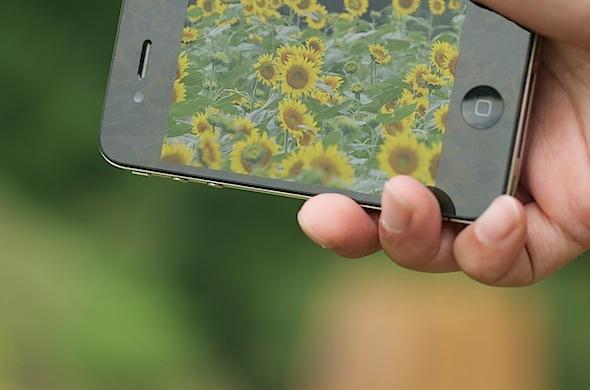 iPhoneとひまわり畑